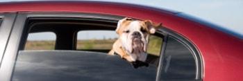 Como llevar mascota en coche